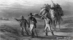 Burke and Wills expedition - Camels were introduced to Australia in the 1800's as pack animals and have thrived in the wild