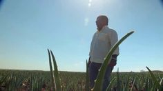 Don Julio talks about Universal Aloe plantations
