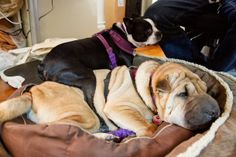 """More Snuggle Time Well, maybe not """"snuggle time"""" as much as """"Yuba doesn't care that Hambone is in her way"""" time."""