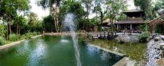 Piscine Naturelle Aquatiss réalisée pour un hôtel au Laos. Jardin zen exotique. Natural Swimming Pools, Laos, Zen, Gardens, Pools, Garden Ponds, Swim, Exotic, Landscape Planner