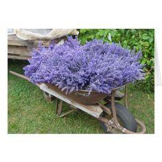 Lavender Filled Wheelbarrow Card