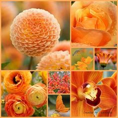 TANGERINE TONES OF NATURE ~ BY CHARLOTTE ~~