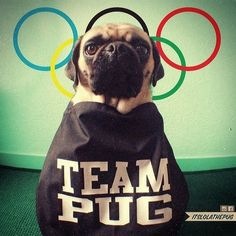 Cute dogs Theres only one team I cheer for at the Winter-Olympics in Sochi ;-) Go Team Pug, GO! Cute Pets
