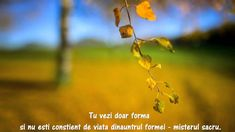 will soon fly away. Flies Away, Eckhart Tolle, Plants, Beautiful, Om, Leaves, Music, Youtube, Musica