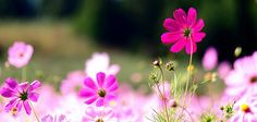 Fb Covers Flowers