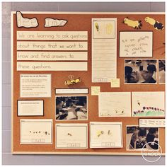 {A Pinch of Kinder} Bee Inquiry Bulletin Board: Making Our Learning Visible!