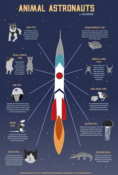 """""""A Graphic Guide to Space Animals"""" - Graphic created by Michelle Enemark, text by Allison C. Meier."""