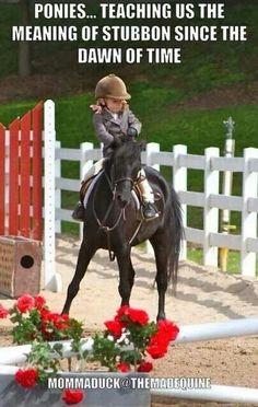 """Oh ponies...Desde niños conocen el significado de """"Terco"""" con un caballo"""