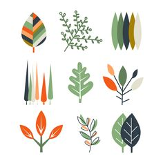 Leaf Set in Flat Design by TopVectors on @creativemarket