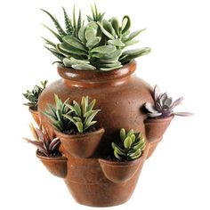 Great for a center piece, strawberries, flowers, succulents   Faux Cactus Potted Arrangement