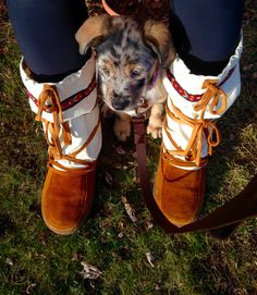 Amy Seip with Paprika - Found the lone patch of grass, safely between mom's feet, to sit and watch the new human brothers do their thing - Superior, WI #mukluk #stegermukluks
