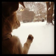 PHOTOS: Pets playing in the snow | MyFOX8.com