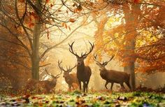 Photographed by Alex Saberi in Richmond Park, London