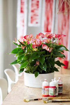 Anthurium Livium: a new generation in anthuriums - Anthura Potted Plants, Indoor Plants, Plant Pots, Indoor Gardening, Anthurium Care, Flamingo Flower, Unique Plants, Flower Aesthetic, Garden Trees