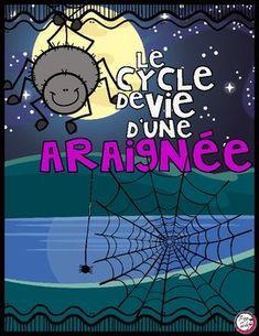 Le Cycle De Vie Dune Araigne