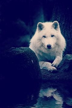 """From Women Who Run With the Wolves: """"The psyches and souls of women also have their own cycles and seasons of doing and solitude, running and staying, being involved and being removed, questing and resting, creating and incubating, being of the world and returning to the soul-place."""" ~ Clarissa Pinkola Estés"""