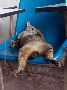 Sleeping in class - cat sleeping strangely in a seat - Katzen - Gatos Cute Funny Animals, Cute Baby Animals, Funny Cats, Wild Animals, Lazy Animals, Cute Cats And Kittens, Kittens Cutest, Pet Cats, Dog Cat