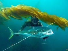 Blue Water Spearfishing in Baja.m4v - YouTube