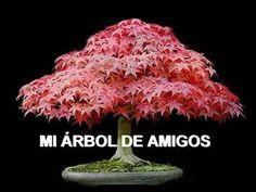 EL ÁRBOL DE LA AMISTAD - YouTube Good Morning Gift, Good Morning Quotes, Diy Organisation, Amazing Nature, Beautiful Flowers, Youtube, Positive Quotes, Truths, Tela