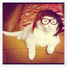 Pin for Later: Is There Anything Better Than Cats Wearing Wigs? The Skrillex Source: Instagram user akearns72