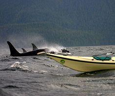 Johnstone Strait, Canada