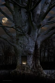 Moon shinning in night sky, behind the tree......but look there is a window with light on, so wonder if someone is at home? Love this night scene!!