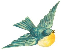 Antique Images: Free Bird Clip Art: Vintage Bird Illustration of Blue Bird with Yellow Chest in Flight