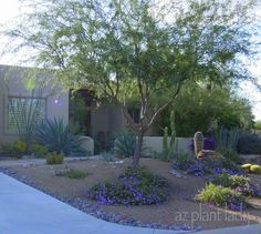 What Is a Sustainable Landscape? - Ramblings from a Desert Garden