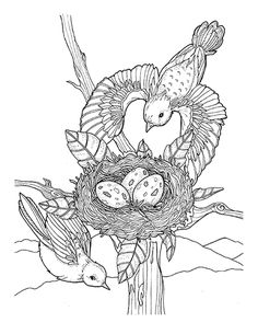 Southern Blooms Coloring Book Page