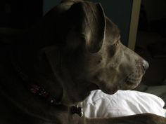 Profile of Lilly - Cloudy SS1/160 F3.2 ISO1600