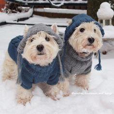 snow doggos