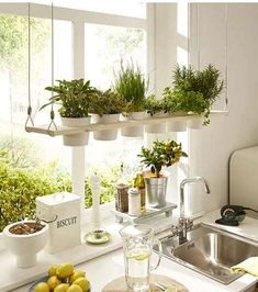 Having plants in your home will improve the air quality of your home and make it look more inviting. [Indoor Plants Potted Plants Indoor Herb Garden Small House Plants Comfortable Home Decor Improving House Comfort Plants In Kitchen Brighten Up Your Home] Kitchen Plants, Kitchen Dining, Herbs In Kitchen, Kitchen Ideas, Herb Garden In Kitchen, Kitchen Garden Window, Kitchen Window Decor, Kitchen Window Shelves, Home Decor Kitchen