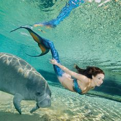 This would be my dream come true! I'd love to save up for a mermaid tail.....but then to swim with manatees - oh my goodness!