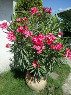 Advice For Growing Beautiful Flowers, Produce And Other Plants - Useful Garden Ideas and Tips Tropical Garden, Tropical Plants, Outdoor Plants, Outdoor Gardens, Organic Plants, Organic Gardening, Different Plants, Plantar, Gardening Supplies