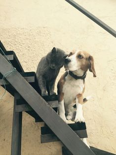 cat and dog Dog Stock Photo, Beagle, Dog Cat, Stairs, Stock Photos, Cats, Pictures, Animals, Design