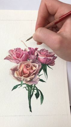 Watch as Niki Lee Shipman uses her talents to paint hyperreal pink spray rose flowers for her greeting card collection. Now available on Etsy! Watercolor Cards, Watercolor Flowers, Drawing Flowers, Painting Flowers, Simple Watercolor, Tattoo Watercolor, Watercolor Animals, Watercolor Background, Watercolor Landscape