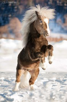 PONY!! Cute little thing rearing up in the snow with a crazy hairdo.