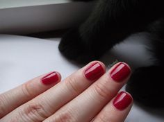 Paw of the Day! (and Make Up Gallery Scarlett Sparkle)