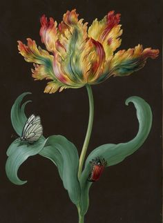 Barbara Regina Dietzsch - Tulpe mit schmetterling und maikafer - before 1783 - via Hamburger Kunsthalle
