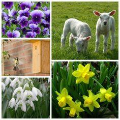 De lente in met Dru Yoga Spring Pictures, Spring Is Coming, Around The Corner, Spring Time, Lamb, Beautiful Flowers, Cow, Meet, Easter