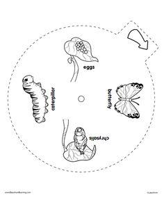 38 Best Homeschool Science: Entomology images in 2016