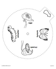 butterfly life cycle wheel template