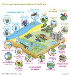 Ecosysteemdiensten in Nederland