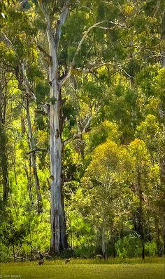 Snowy Mountains, Kosciuszko National Park, http://www.bloggerme.com.au/states/snowy-mountains Australia