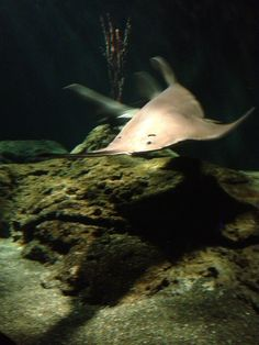 National Aquarium; Baltimore
