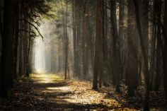 forest-paths-7.png (750×499)