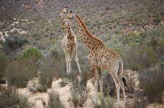 Dagsafari i Sør-Afrika