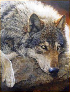 Wolf by Bonnie Marris