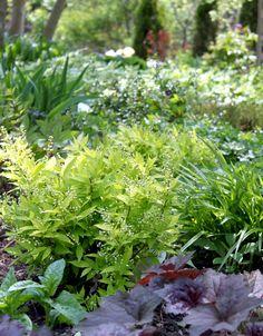 164 best Shade Gardens images on Pinterest | Backyard ideas ... Semi Shade Garden Zone Design Html on