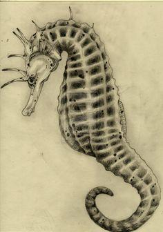 Seahorse by Pearl-Kitsune.deviantart.com on @deviantART